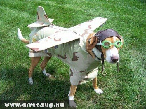 Air Fashion Dog